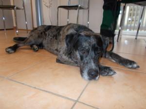 Fundhund aus Nonnenweier vom 20.01.18