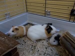 Fiona und ihre Töchter