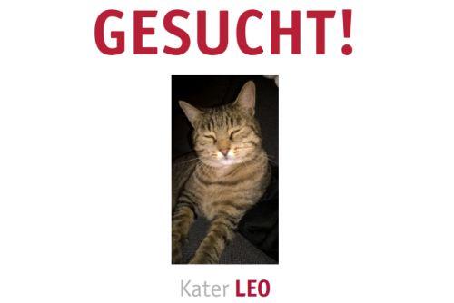 Gesucht Leo